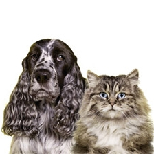 Hygiëne voor hond en kat
